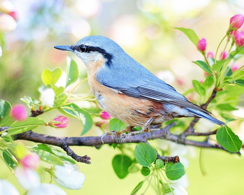 Spring snapshot - blue bird