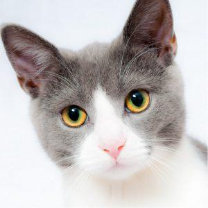 Test Image of Cat