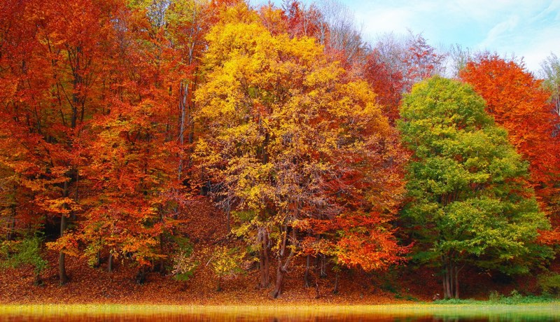Trees with colors of autumn