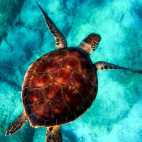 Turtle Wildlife colors