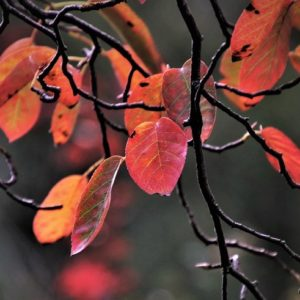 Twigs and red leaves