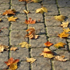 Pavement with autumn colored leaves