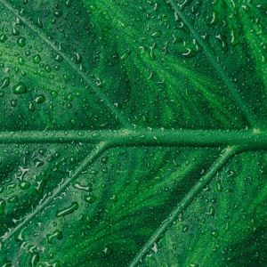 Water Droplets on Green Leaf image color scheme