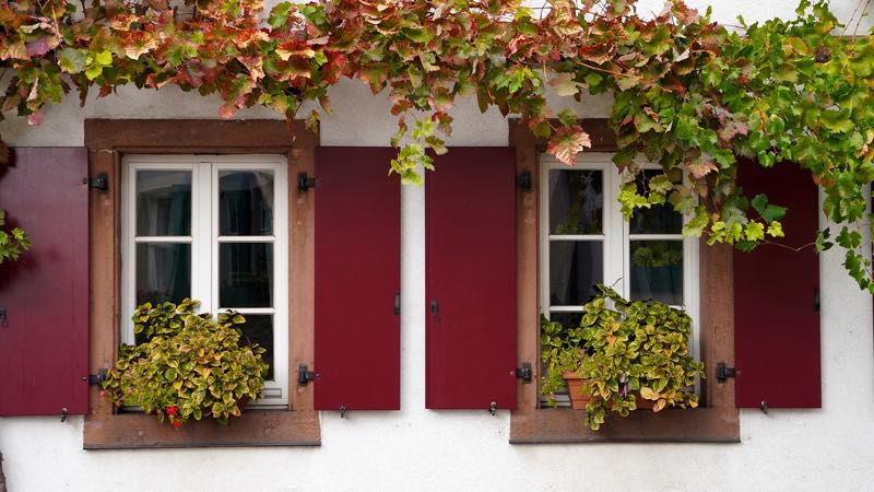Vines on white windows and red shutters
