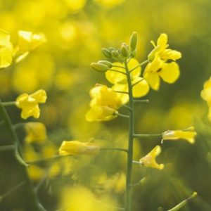 Yellow Spring Flowers